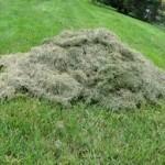 Bola em monte de grama recém-cortada. Tem direto a alívio?